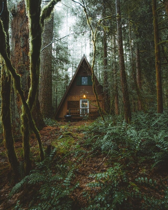 forest, trees, green and lifestyle