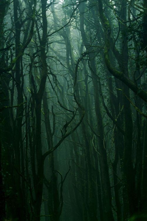 scary, green, forest and aesthetic