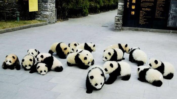 travel, animals, babies and sichuan giant