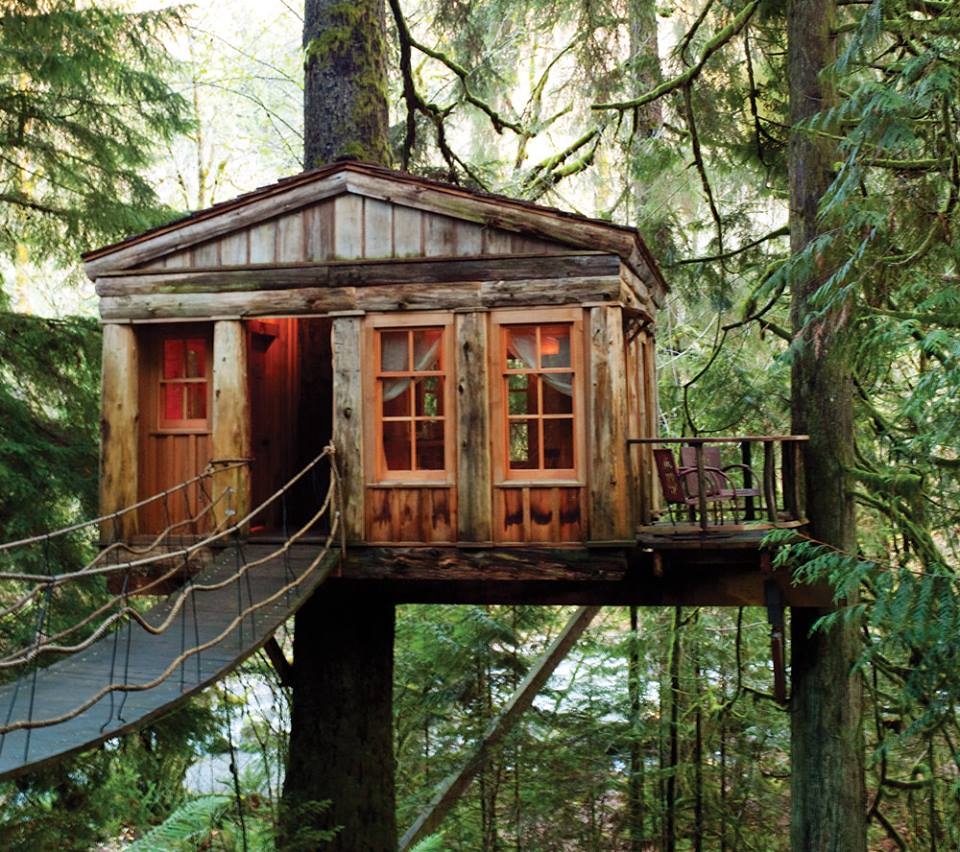 forest, happy, cabins and woods