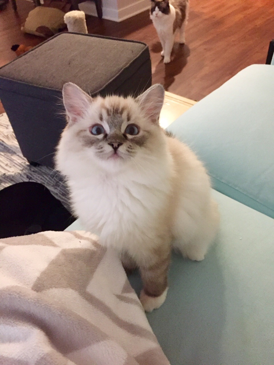 cat, beautiful, feed and ?