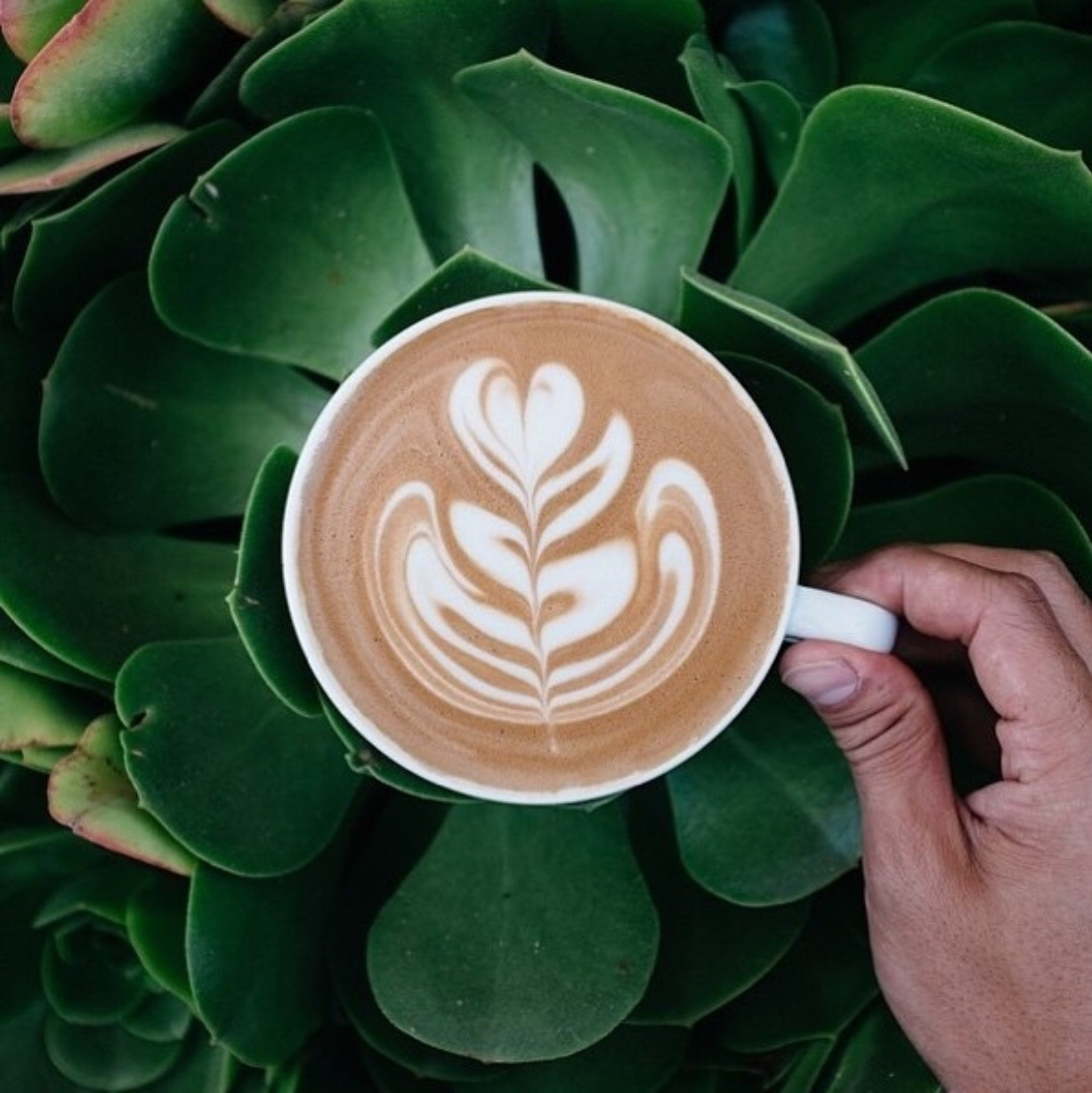 chocolate, latte art, food and drink