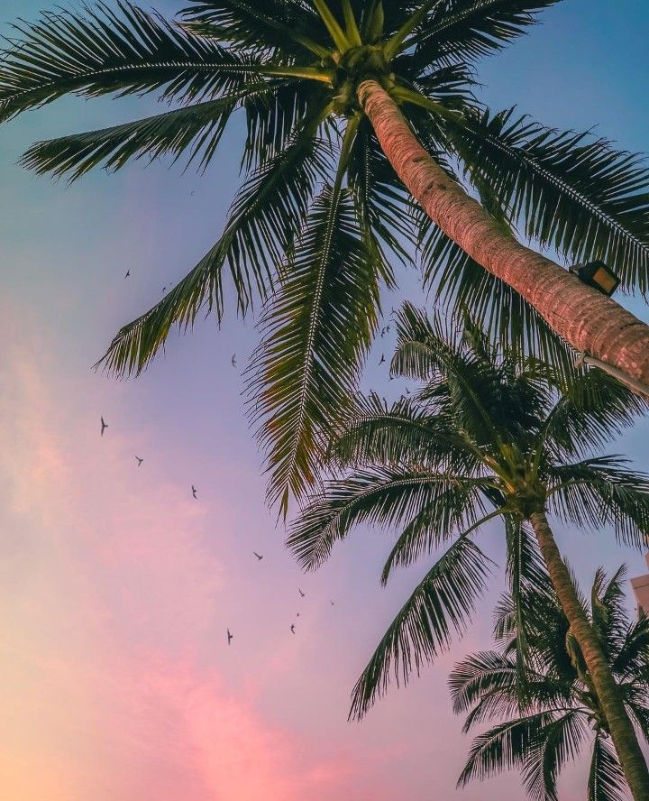palm trees, beautiful, summer and beach