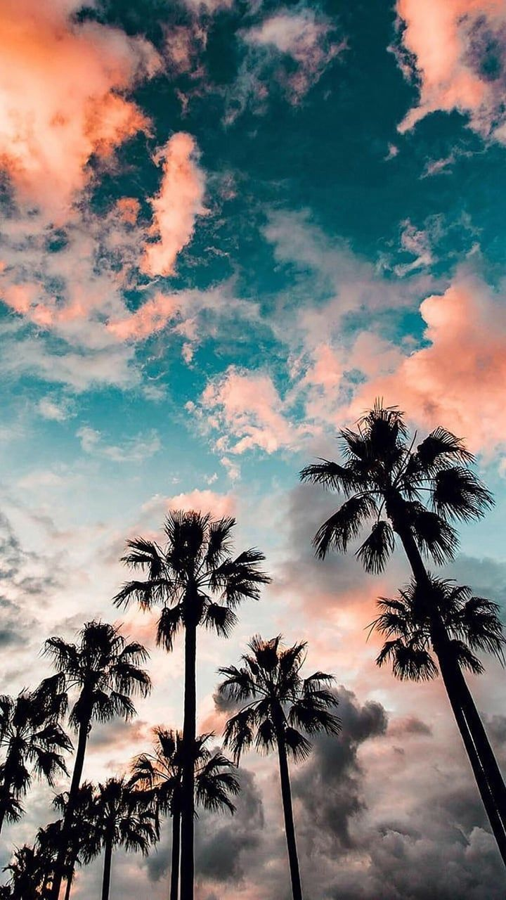 palm trees, beautiful, tropical and summer