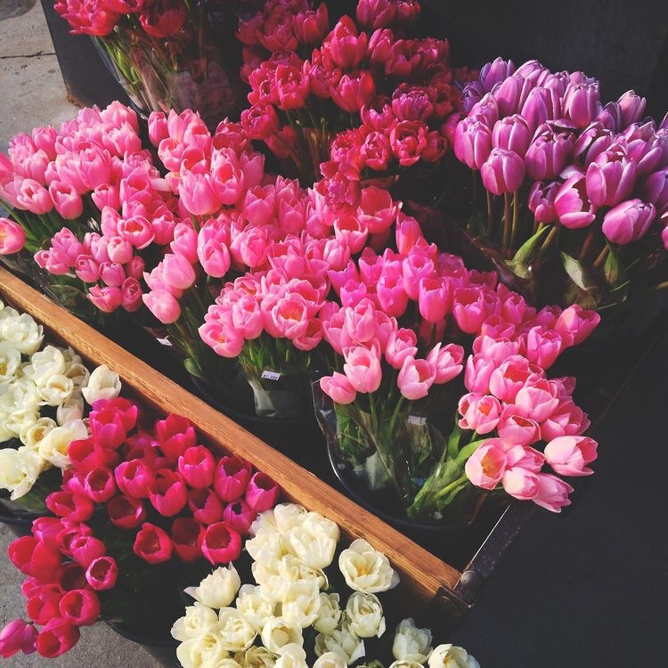 girly, flowers, tulips and picture