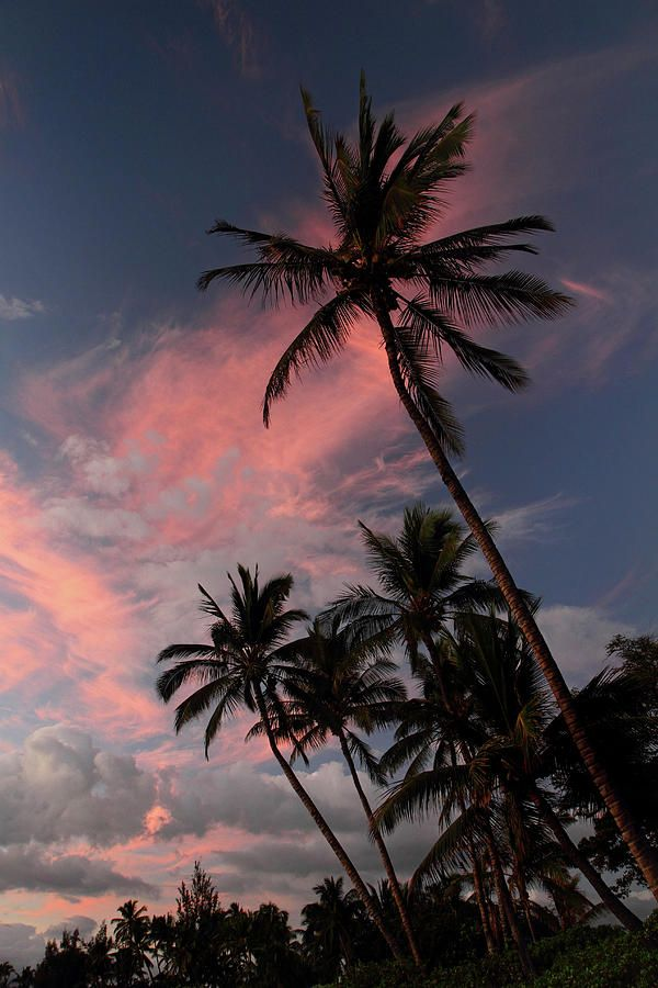 palm trees, tropical, beach and summer