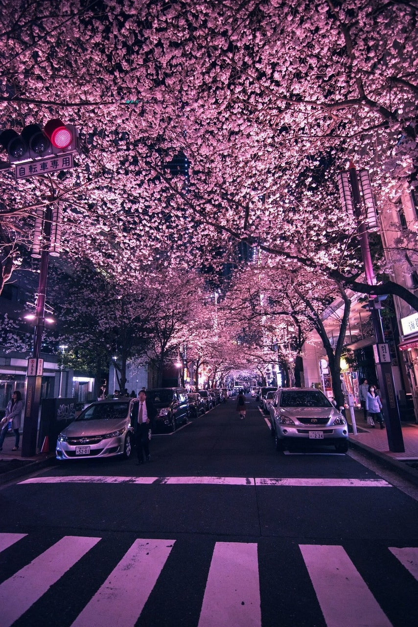 cars, background, lights and pink