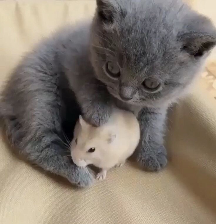 furry, kitty, cat and pet