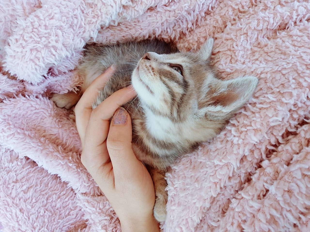 pale, kitty, blanket and pink