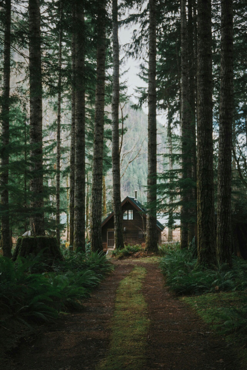 nature, vintage, cozy and forest