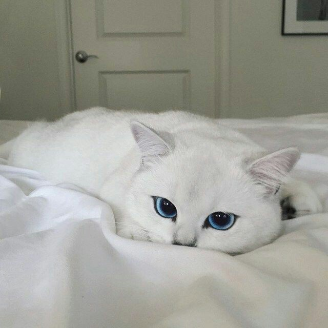 eyes, animals, cute and cats