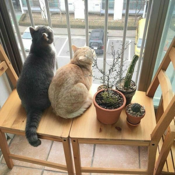 animals, lovely, cactus and kittens