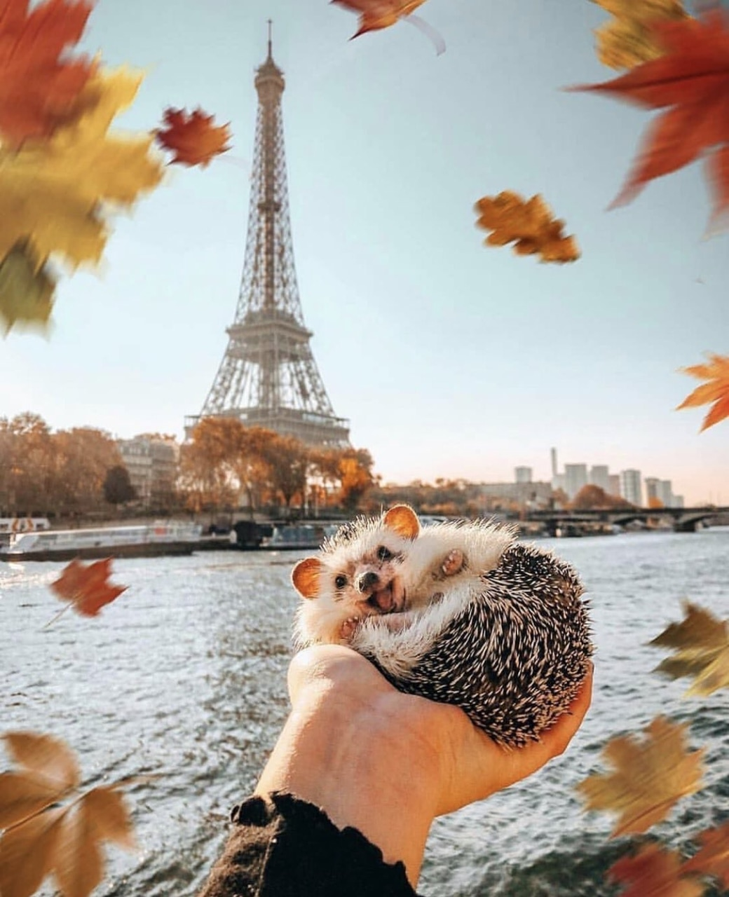 eiffel tower, fall, love and leaves