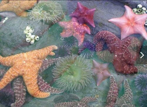 starfish, indie, underwater and aesthetic