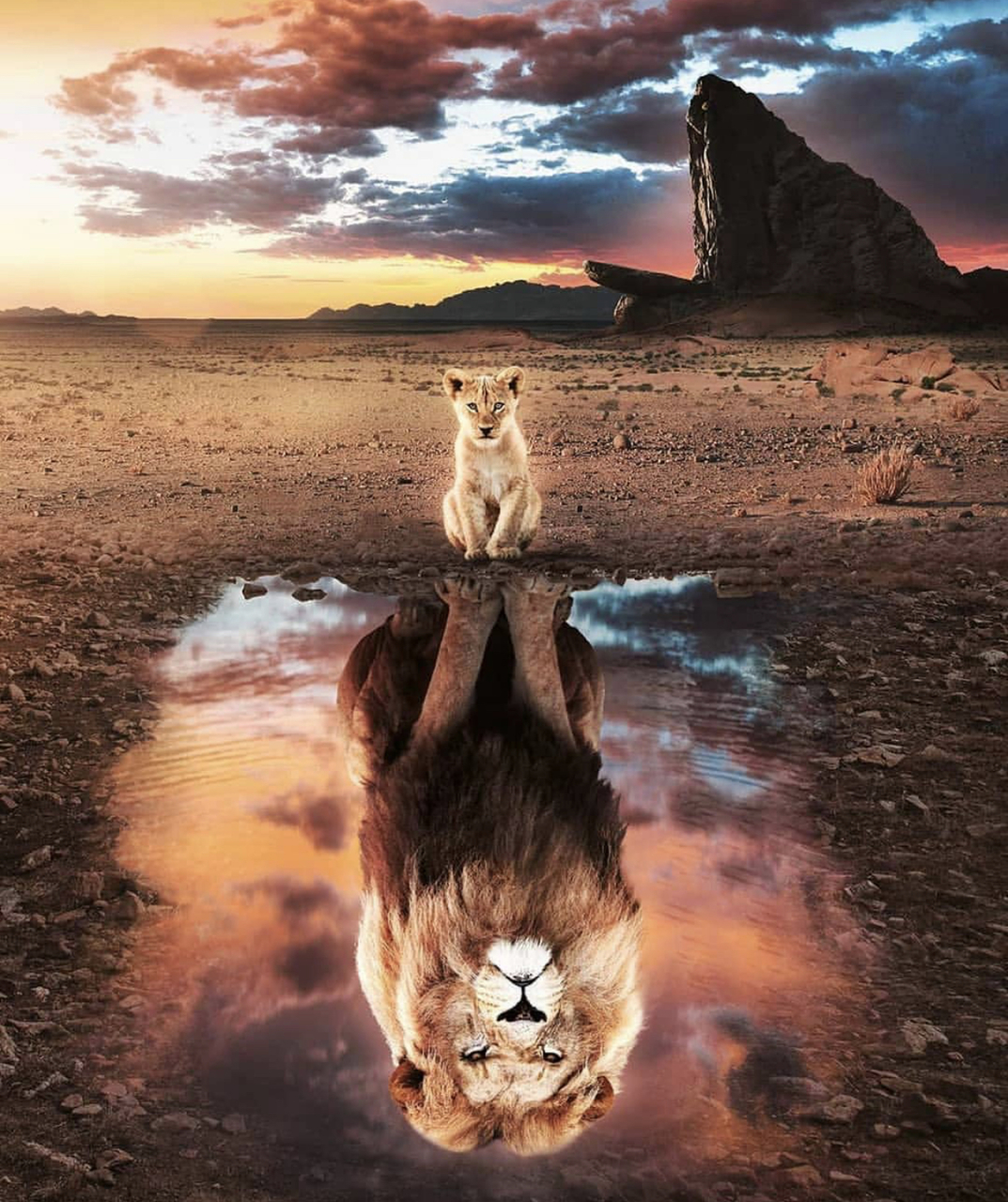 lionking, lion, africa and animal