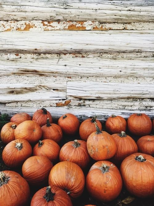 cold, pumpkin, coze and inspiration