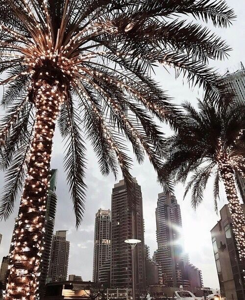 palm trees, los angeles, city and travel