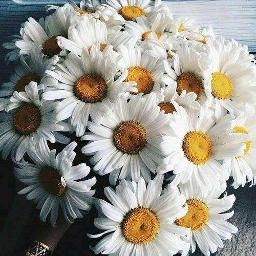 daisies, flower, bouquet and flowers