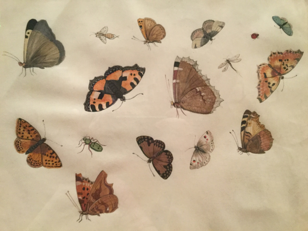 butterflies, printed, bugs and japan