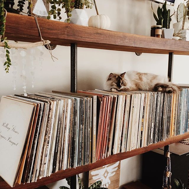 cat, record player, vinyl and cute
