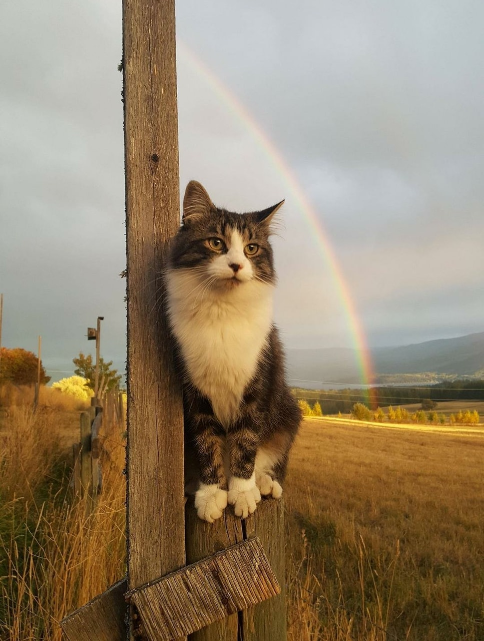 pet, kitty, color and nature
