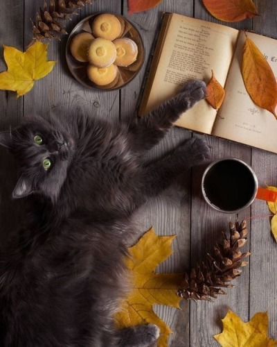 cat, black cat, pinecone and coffee