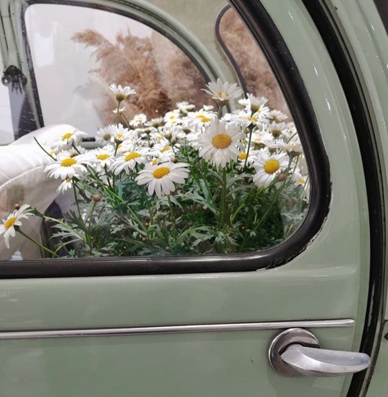 green, flowers, daisies and car